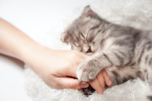 飼い主の手を掴んで眠る猫