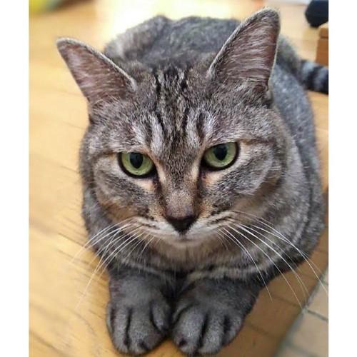 玄関でお出迎えしてくれる猫