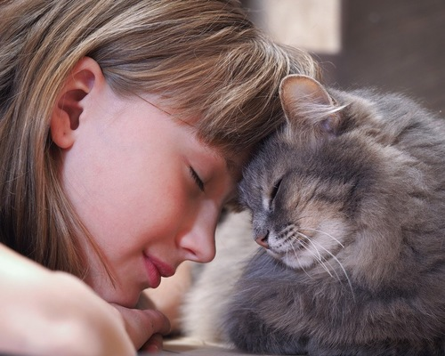 猫と頭を合わせる女性