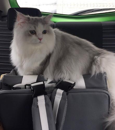 車の中のマミ