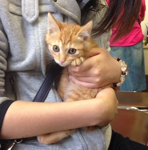抱っこされる子猫(すずこ)