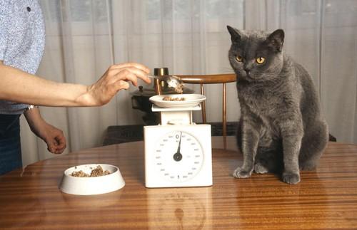 座る猫とフードの計測をする飼い主