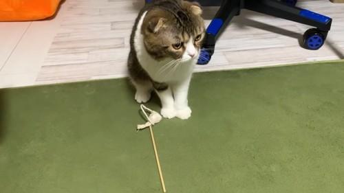 おもちゃの前に立つ猫