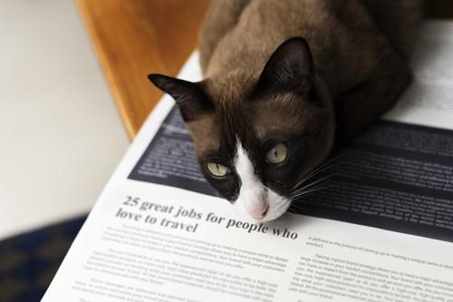新聞の上に寝る猫