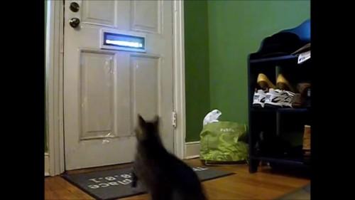 駆け寄る猫