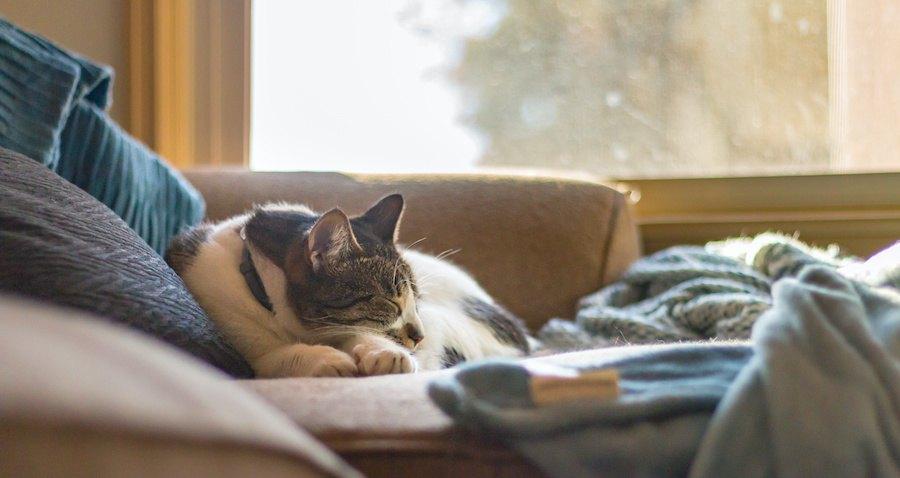 窓際のソファーの上で眠る猫