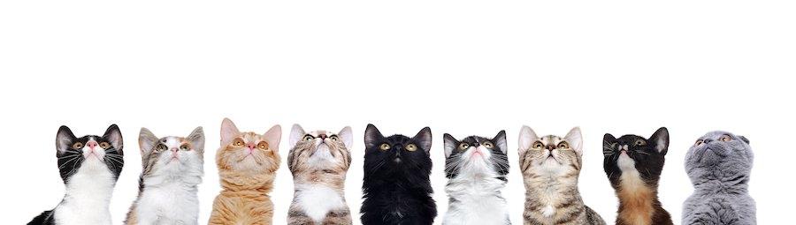 猫種の違う9匹の見上げる猫