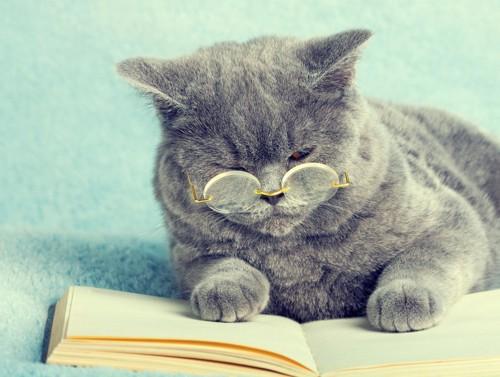 眼鏡をかけて本を読む猫の写真