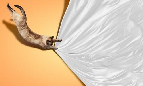 シーツを引っ張る猫