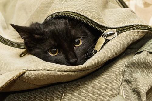 カバンの中に入って顔だけ出す猫