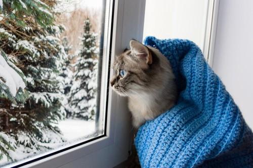 雪景色を見る青いマフラーの猫