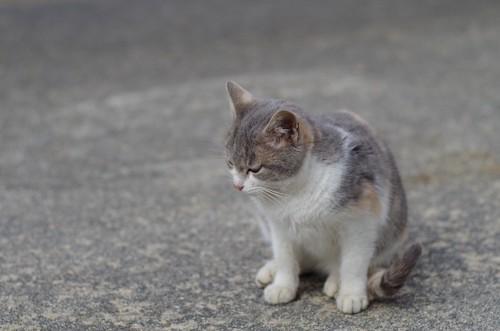 下を向いて座る野良猫