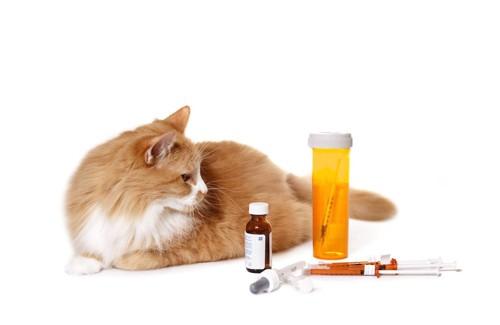 薬と注射器を見つめる猫