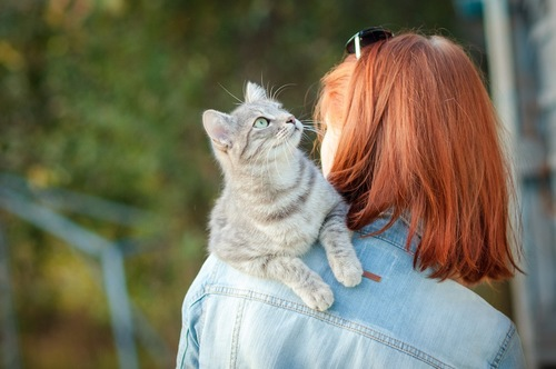 女性の肩に登る猫