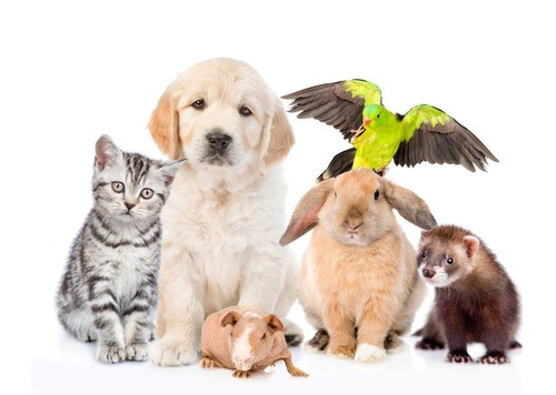 集まる動物