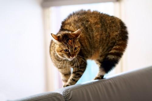 背中を丸めた猫