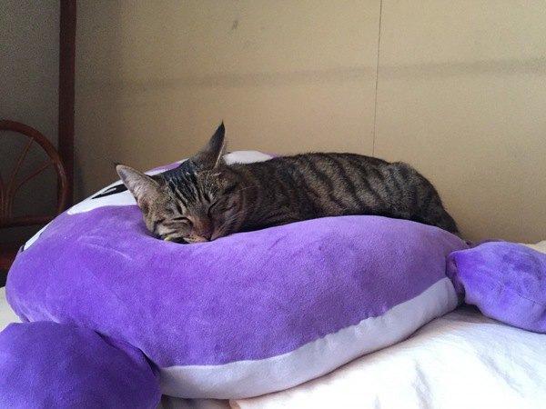 紫色のクッションで寝る猫