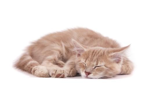 片手を曲げて眠る猫
