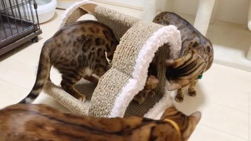 爪とぎに集まる猫