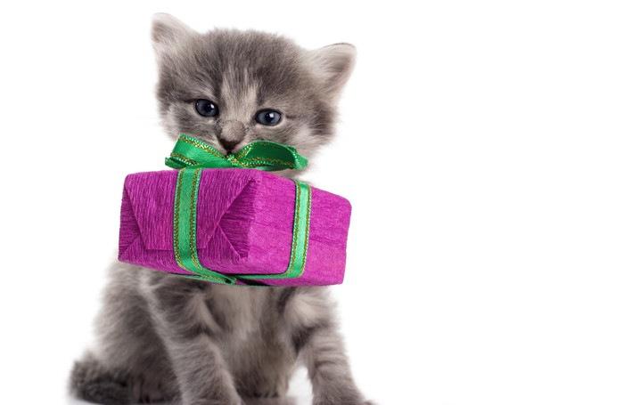 プレゼントの箱をくわえる子猫