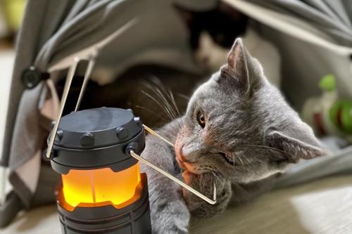 家でキャンプを楽しむ猫