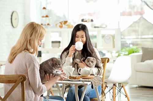 お茶をする人たちと猫