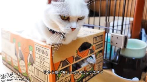 隙間から上を見る猫