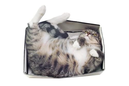 狭い箱に入ってくつろぐ猫