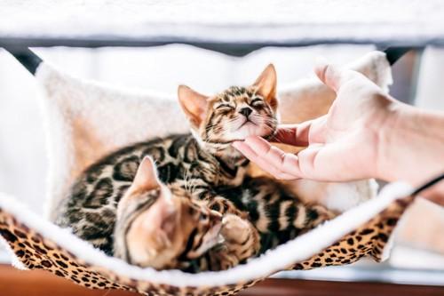 顎を撫でられる猫