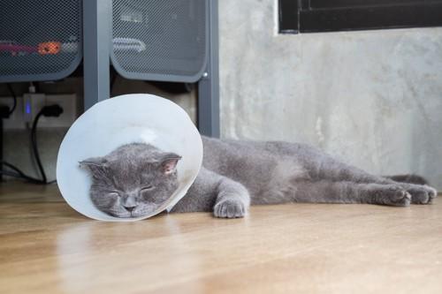 エリザベスカラーをつけてぐったりする猫