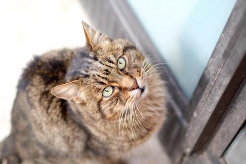 ドアの前で座る猫
