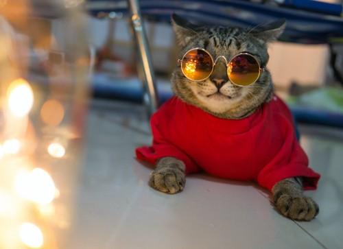 サングラスをかけて赤い服を着ている猫