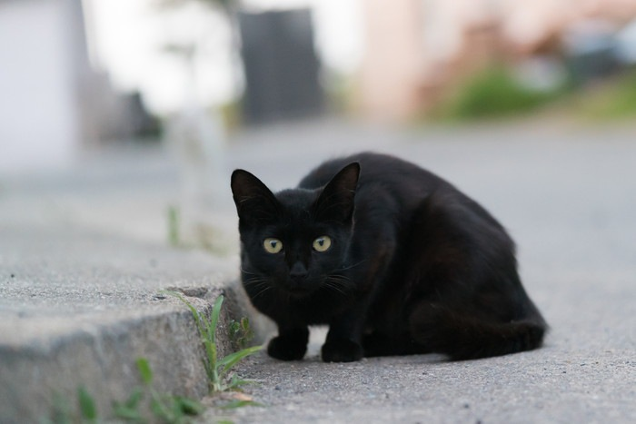 こちらをみる黒い野良猫