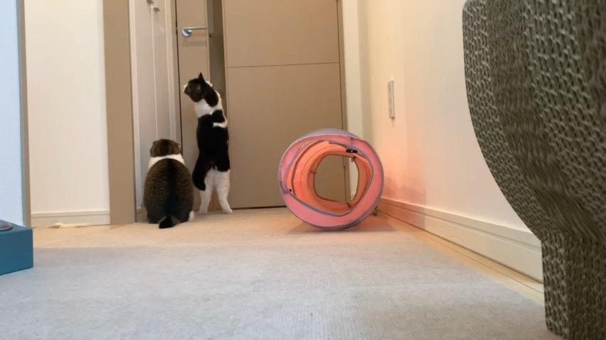 ドアの前に座る猫と立つ猫
