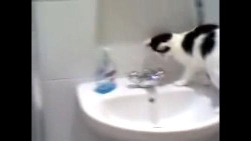洗面所に乗る猫