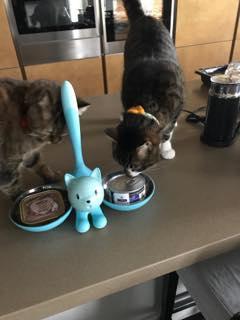 食事中の猫達