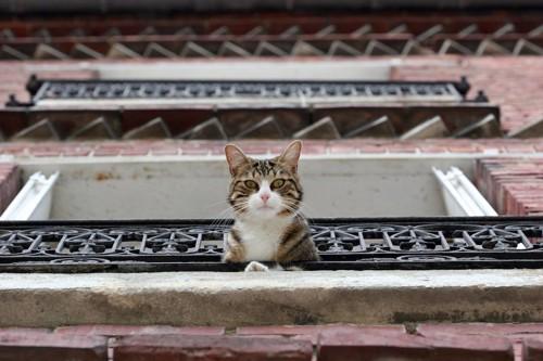 上から下を見下ろす猫