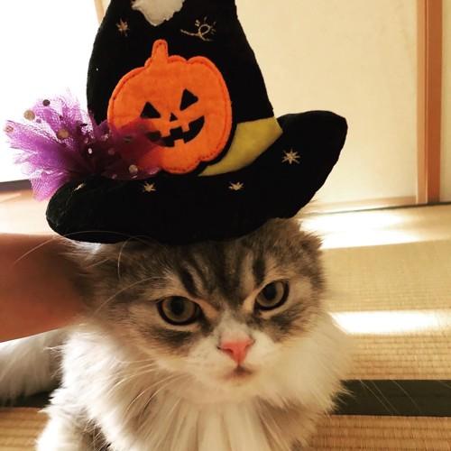 ハロウィンを楽しむ猫