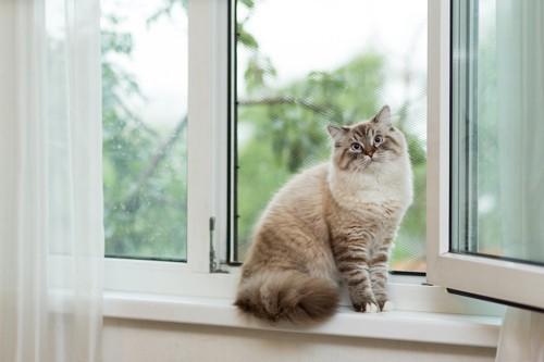 網戸になっている窓辺に座る猫