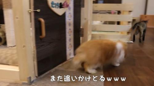 猫を追いかけるウサギ