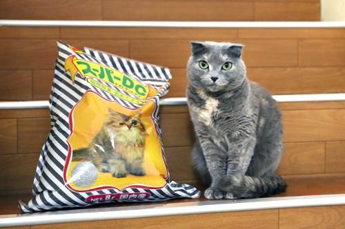 猫と猫砂の袋