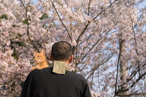 僧侶の肩に乗る茶猫