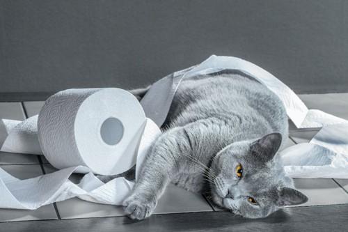 トイレットペーパーと横になった猫