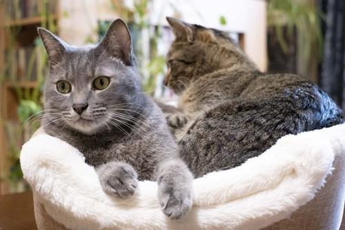 くつろぐ猫達