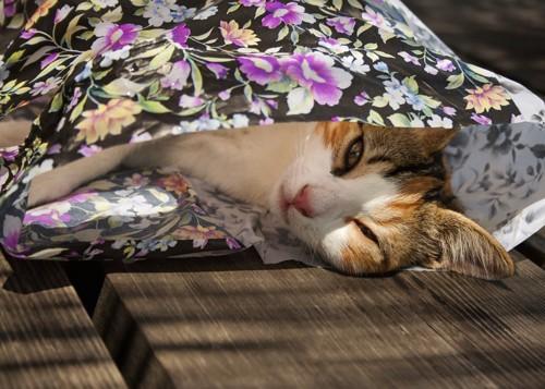花柄の袋に入っている猫