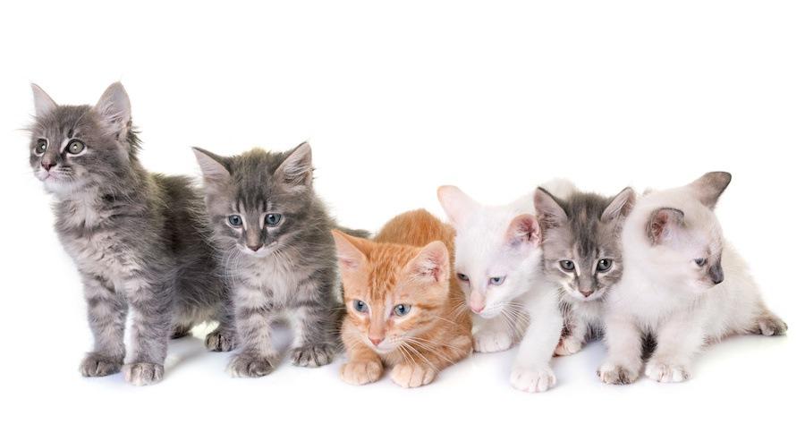 いろいろな種類の子猫たち