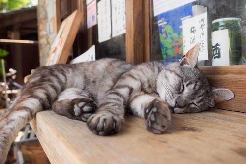 売店の台の上で眠る猫