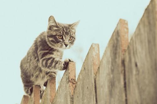 塀を歩く猫