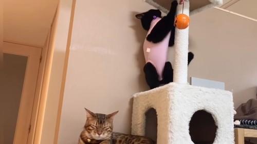 立っている黒猫