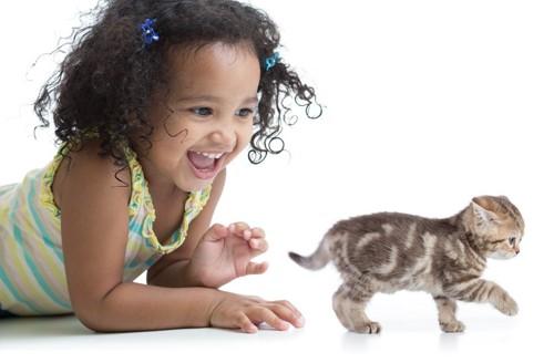 子猫を追いかけまわす子供